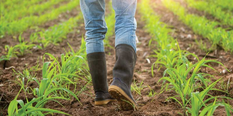 Best Farm Boots For Hot Weather