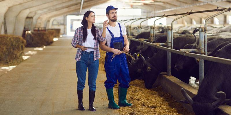 Farm-boot